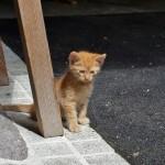 """Kätzchen """"Garfield"""""""