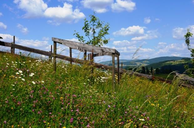 Blühende Wiesen und sanfte Hügel