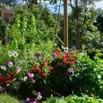 Blumen frisch vom Garten