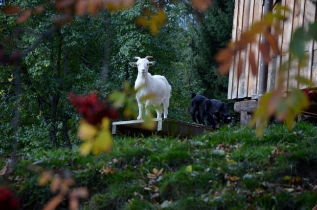 Tiere am Bauernhof