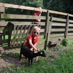 Körperpflege bei den Ziegen