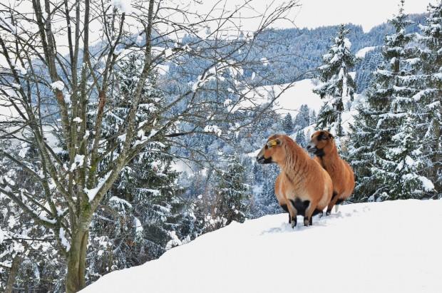 Vierbeiner im Schnee