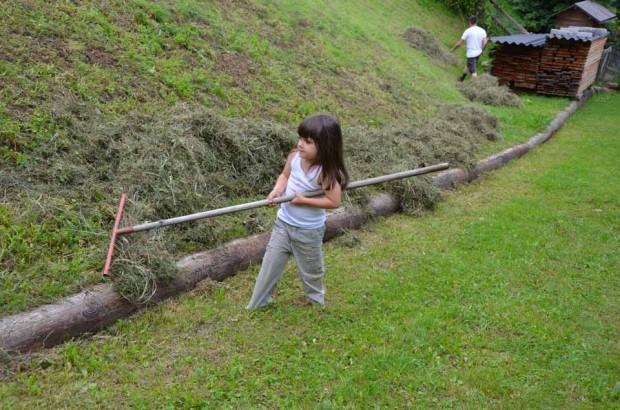 Mithilfe bei der Heuarbeit am Familienbauernhof.