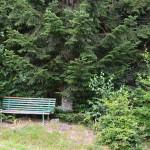 Ruhiges Plätzchen bei einer Waldlichtung