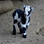 Kinder & Babybauernhof ... bei den Tieren