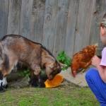 Zwergzwiegen füttern und beobachten