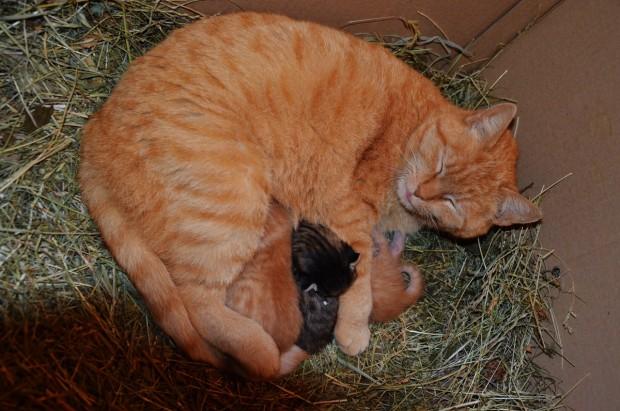 Schnurrli mit ihren Katzenbabys