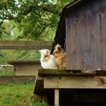 Freundschaft schließen mit den Kaninchen