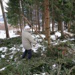 Waldarbeit