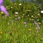 Bunte Blumenwiese hinterm Haus