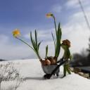 Auf dem Weg in den Frühling