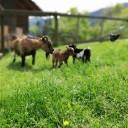 Zuwachs am Bauernhof